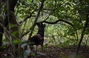 130916 Fenga Rettungshundearbeit